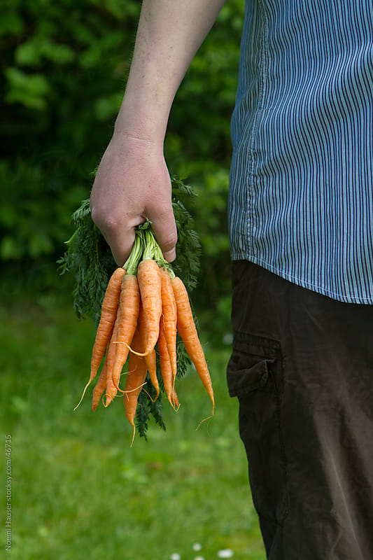 Bundle of carrots holded by man by Noemi Hauser for Stocksy United
