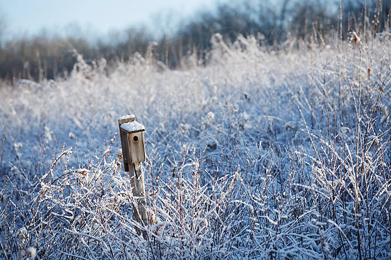 Winter Nest Box by Paul Tessier for Stocksy United