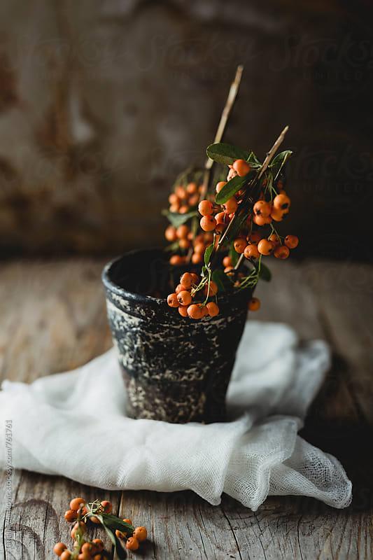 Orange pyracantha berries by Tatjana Zlatkovic for Stocksy United
