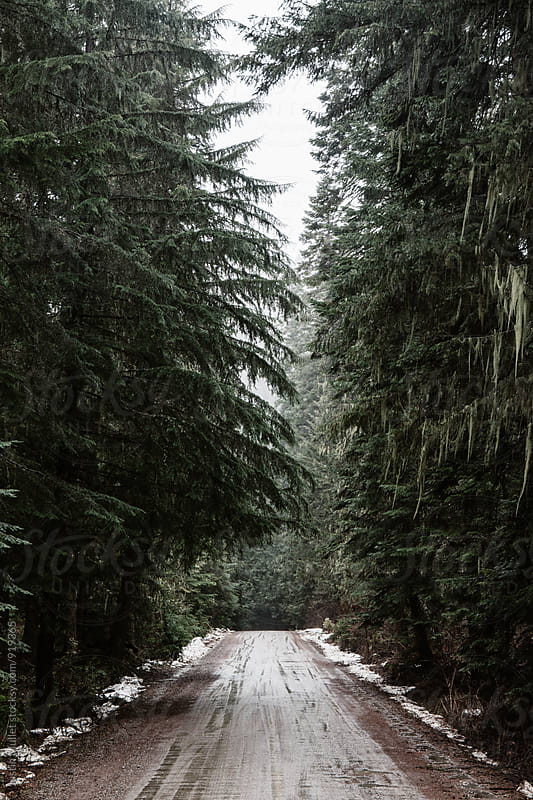 Primitive road through the wilderness. by Justin Mullet for Stocksy United