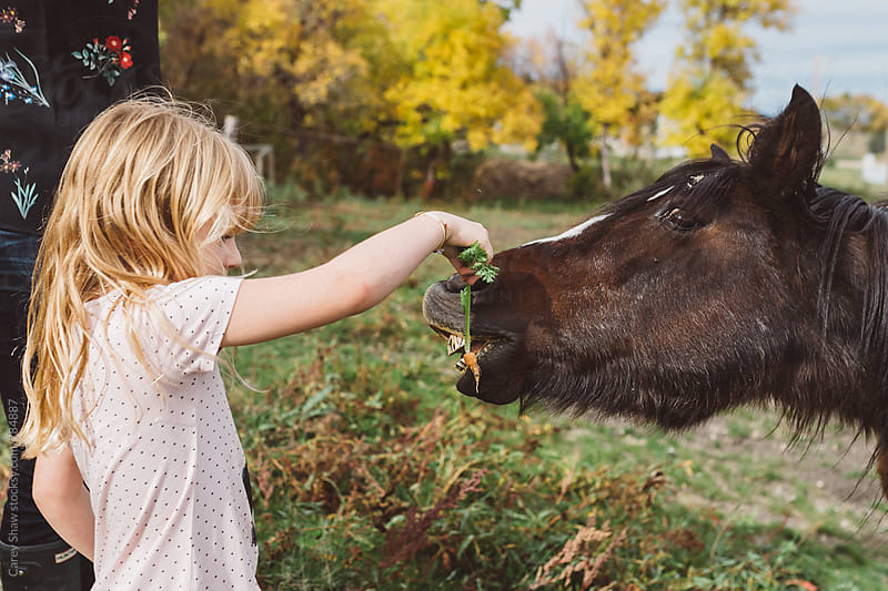 Child feeding carrots to hungry pony by Carey Shaw for Stocksy United