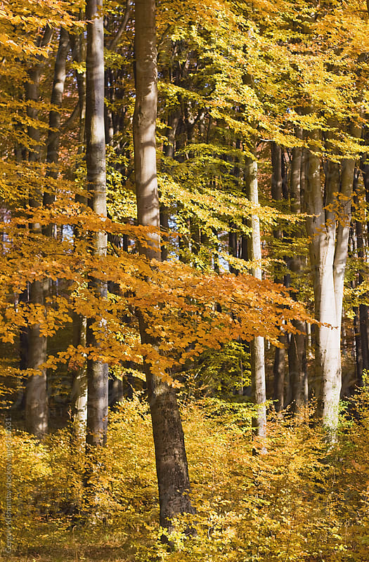 Serene autumn colors. by Gergely Kishonthy for Stocksy United
