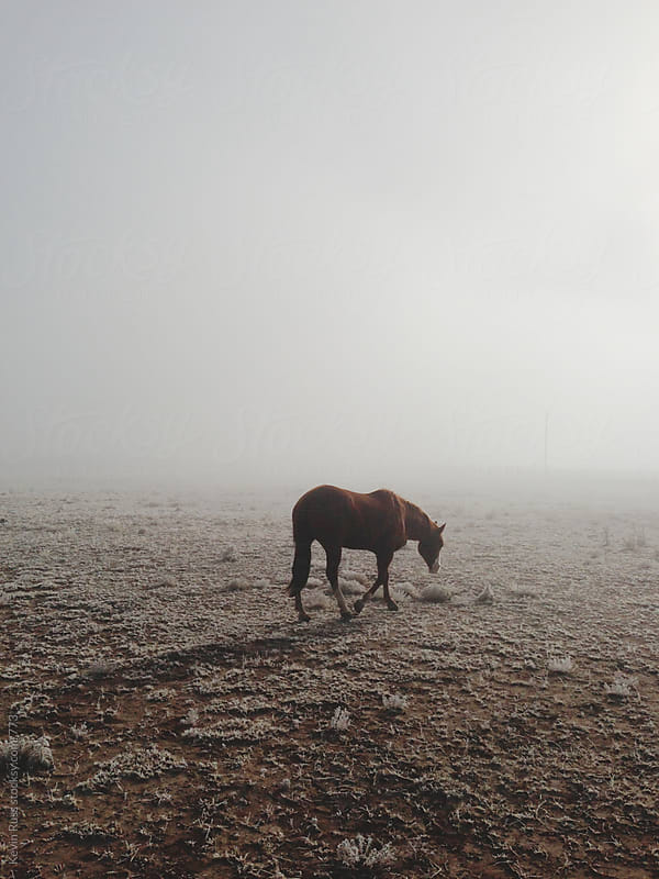 Sad Fog Walking Horse by Kevin Russ for Stocksy United