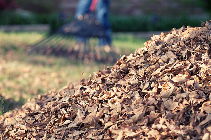 Autumn: Pile of Leaves with Person Raking Behind by Sean Locke for Stocksy United