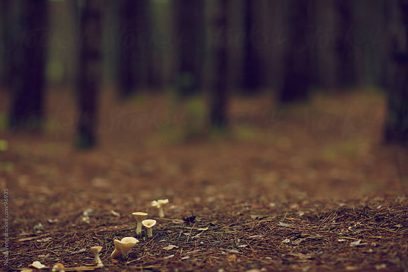 Tiny mushrooms grow in forest clearing by Nick Wong for Stocksy United