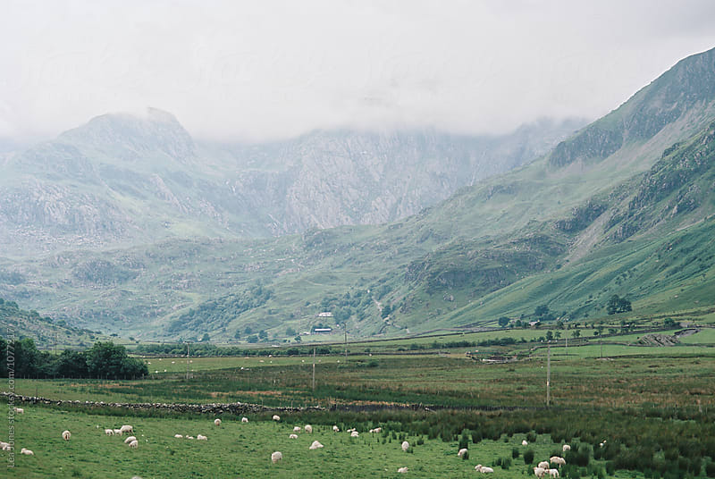 sheep at the feet of mountains in Wales by Léa Jones for Stocksy United