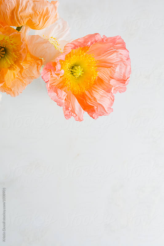 Poppy flowers by Kristin Duvall for Stocksy United