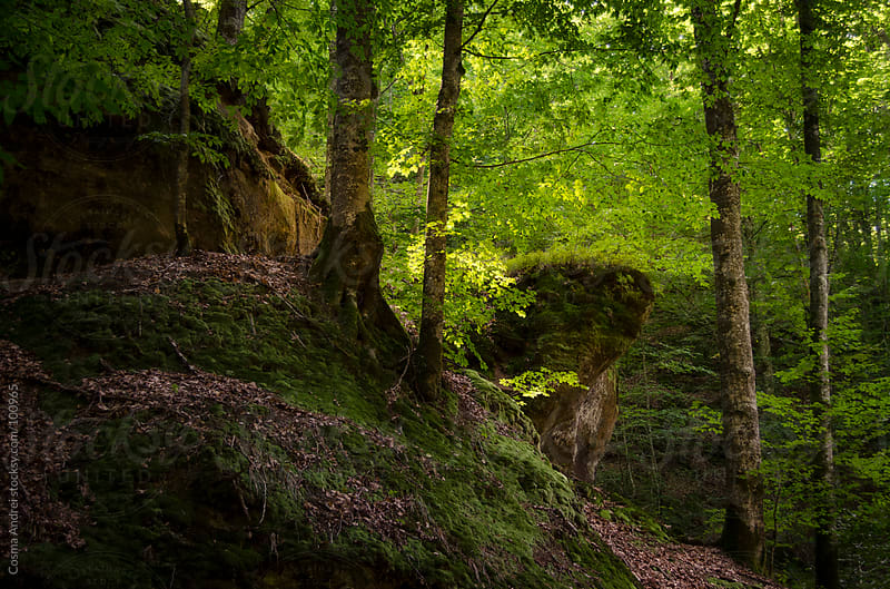 Trees on cliff in a beautiful green forest by Cosma Andrei for Stocksy United