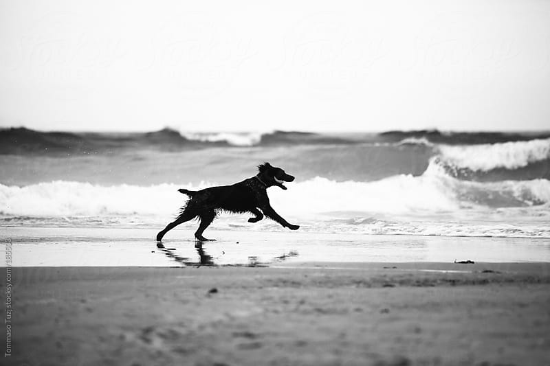 dog on the beach by Tommaso Tuzj for Stocksy United