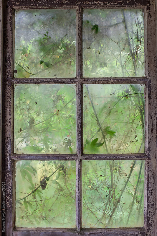 Looking through an old window by Rowena Naylor for Stocksy United
