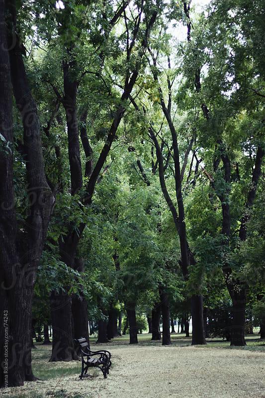 Park by Jovana Rikalo for Stocksy United
