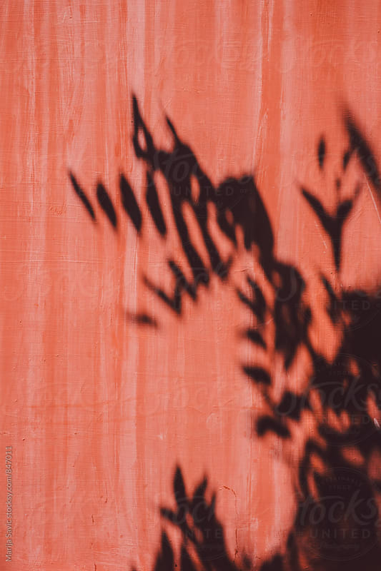 Leaf Shadow on Pink Wall by Marija Savic for Stocksy United