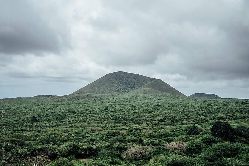 Ecuadorian Jungle by Richard Brown for Stocksy United