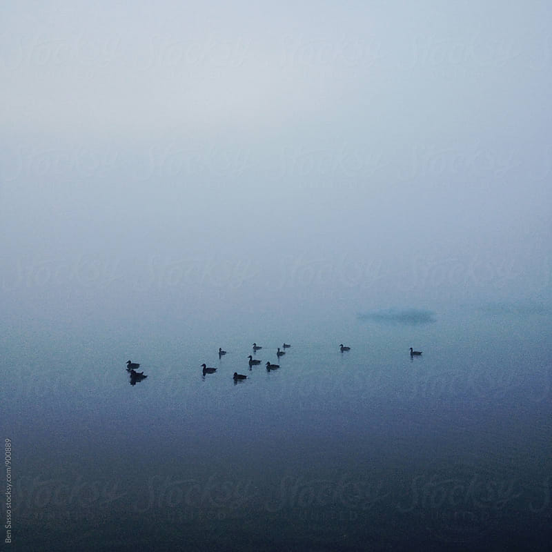 Ducks in foggy lake by Ben Sasso for Stocksy United