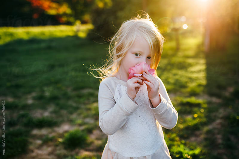 A little girl with blonde hair smells a rose in the evening light by Amanda Voelker for Stocksy United