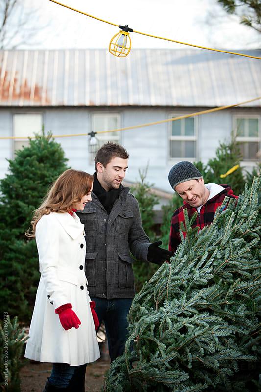 Tree Lot: Couple Choosing a Christmas Tree by Sean Locke for Stocksy United