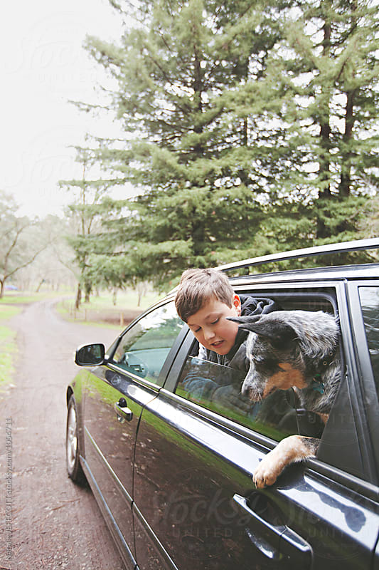 A young boy and his dog looking out a car window in nature park by Natalie JEFFCOTT for Stocksy United