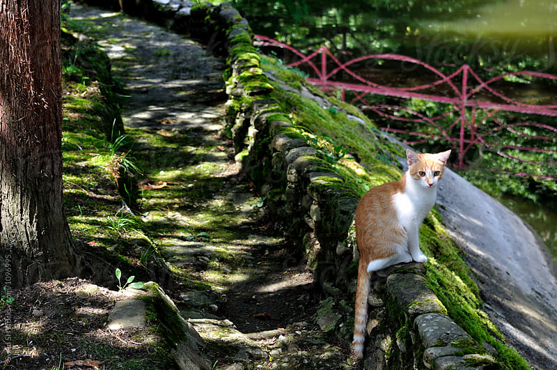 Ginger cat by Sveta SH for Stocksy United