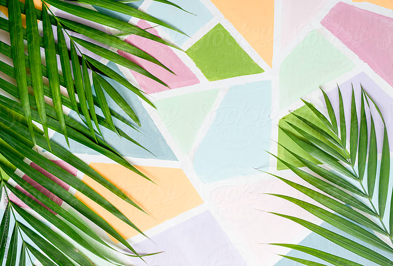 Palm leaf against colorful wall by Alita Ong for Stocksy United