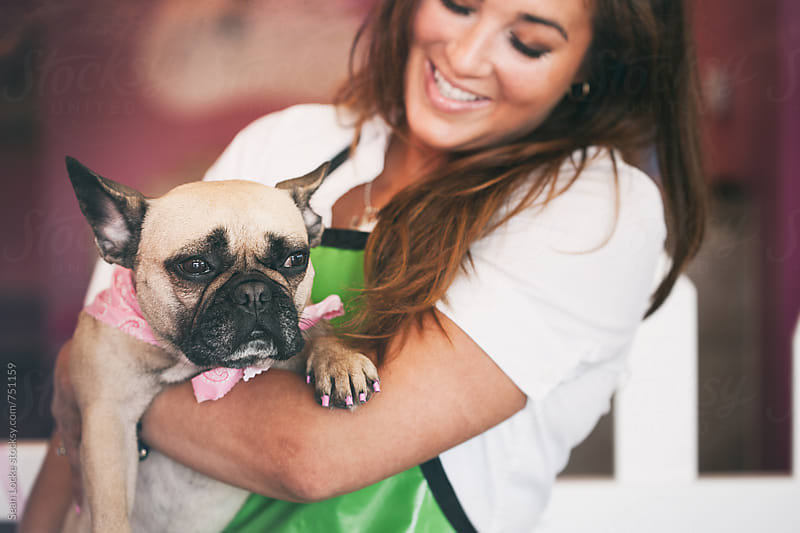 Groomer: French Bulldog Held By Groomer After Treatment by Sean Locke for Stocksy United