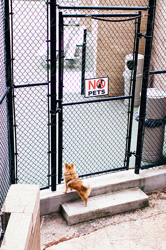 No Pets Allowed by Taylor Kampa for Stocksy United