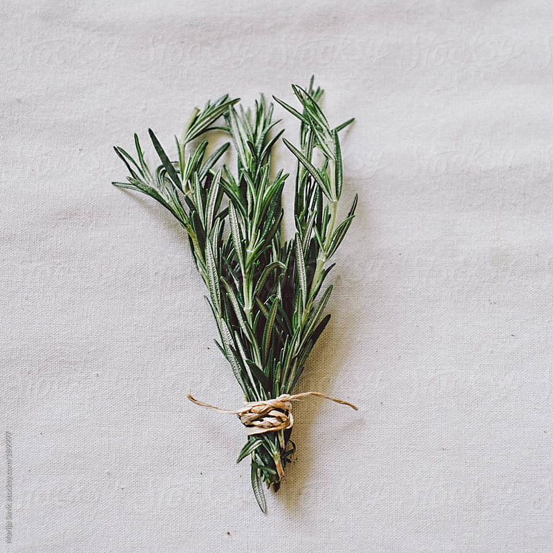 Rosemary on White Fabric by Marija Savic for Stocksy United