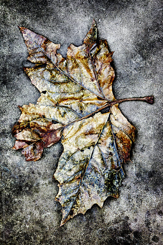 A patterned leaf on stone by James Ross for Stocksy United
