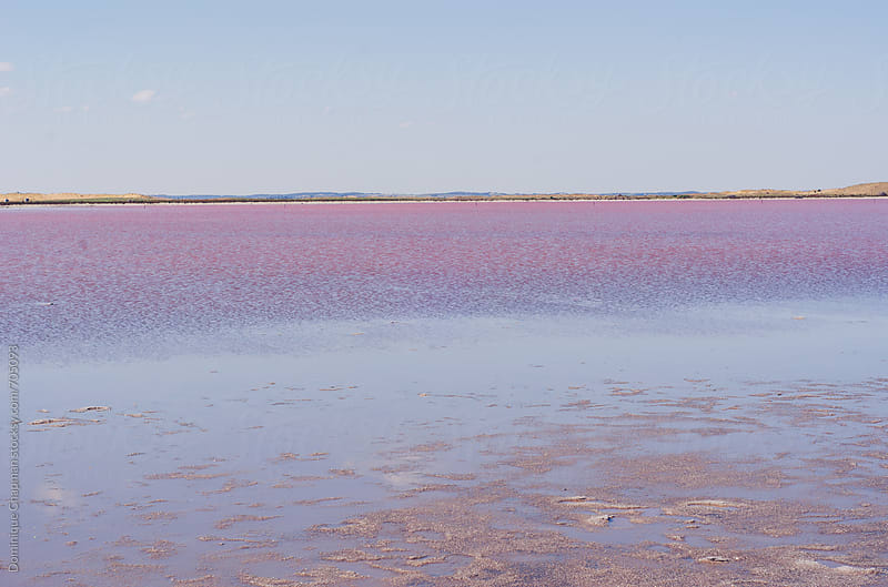 Pink Salt Lake  by Dominique Chapman for Stocksy United