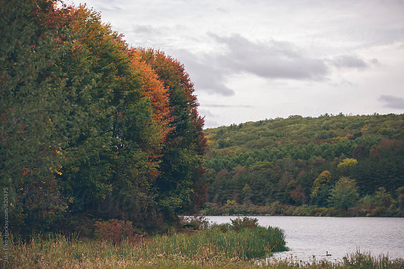 Beautiful Fall Colors in Pennsylvania by Jake Elko for Stocksy United