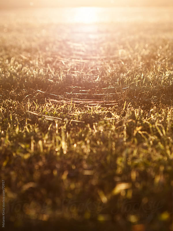 Spiderwebs cover a field of grass as the sun sets on an autumn day by Melanie Kintz for Stocksy United