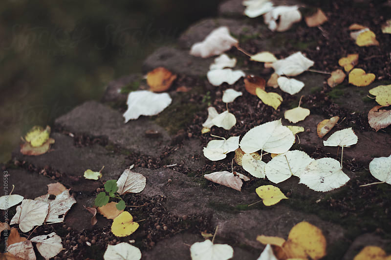 Autumn leaves by Jovana Rikalo for Stocksy United
