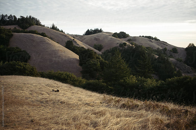 Rolling hills on top of Mount Tam. by Lucas Saugen for Stocksy United