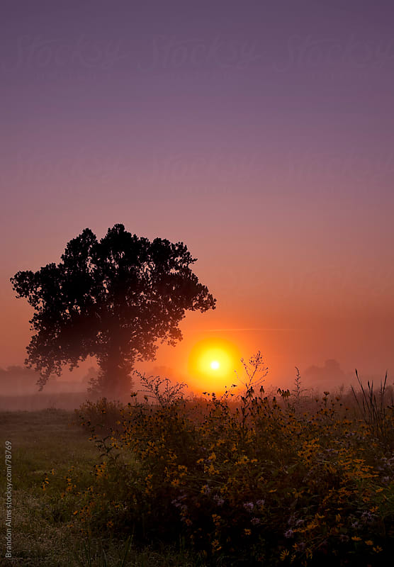 Alone Tree at Sunrise in a Field of Wildflowers by Brandon Alms for Stocksy United