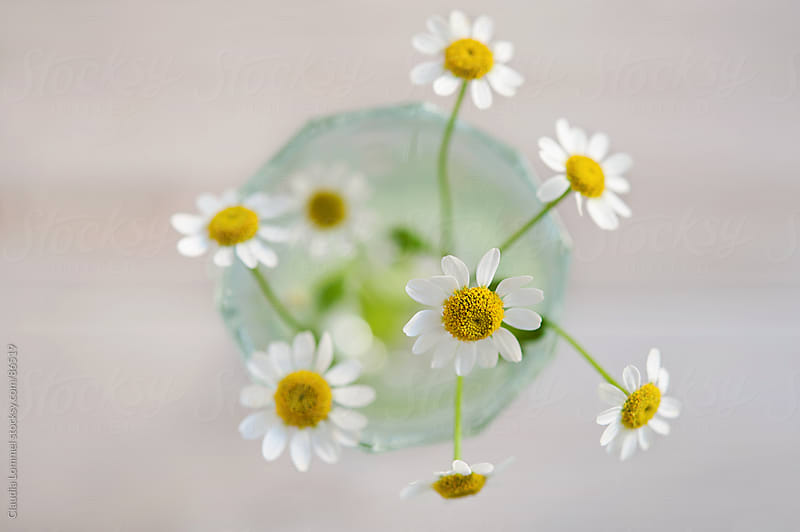 Small Bunch of Daisies in a Vase from Above by Claudia Lommel for Stocksy United
