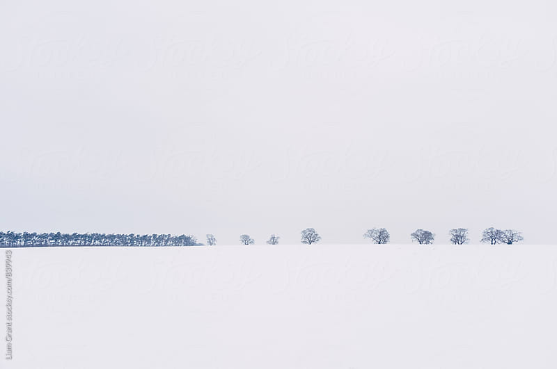 Trees on the horizon of a snow covered field. Norfolk, UK. by Liam Grant for Stocksy United