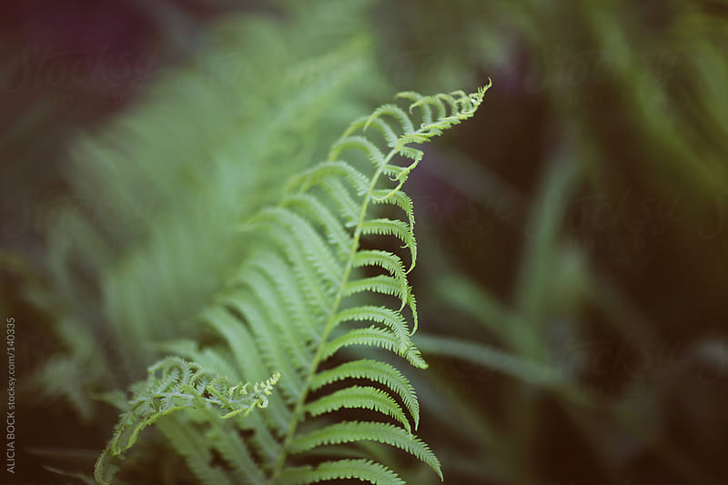 Fern Leaves #4 by ALICIA BOCK for Stocksy United