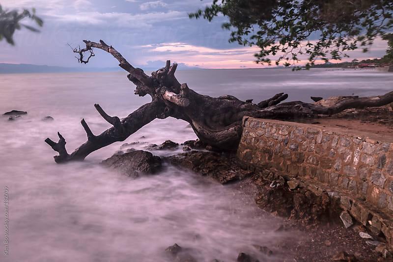 Dead tree by Kien Bo for Stocksy United