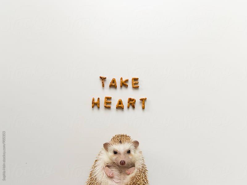 Take Heart Hedgehog by Sophia Hsin for Stocksy United