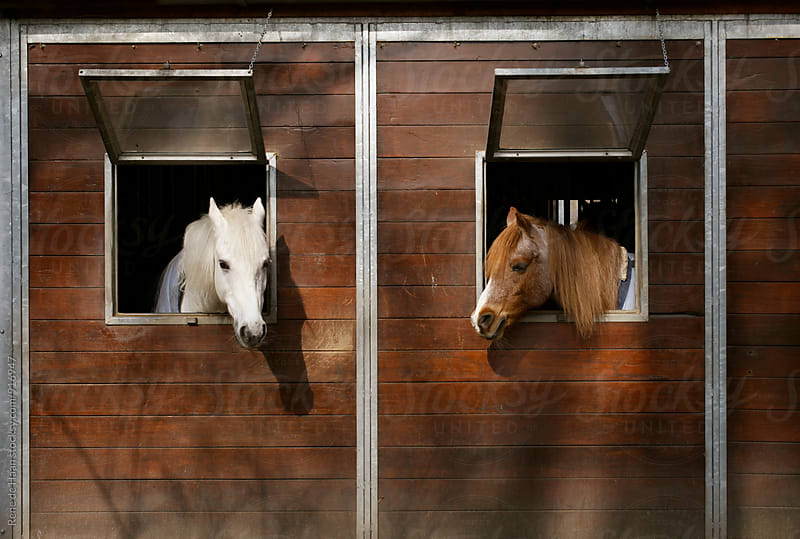 two horses in stable by Rene de Haan for Stocksy United