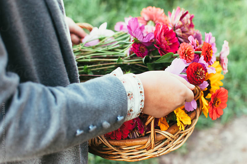girl carrying basket of fresh-picked flowers by Deirdre Malfatto for Stocksy United