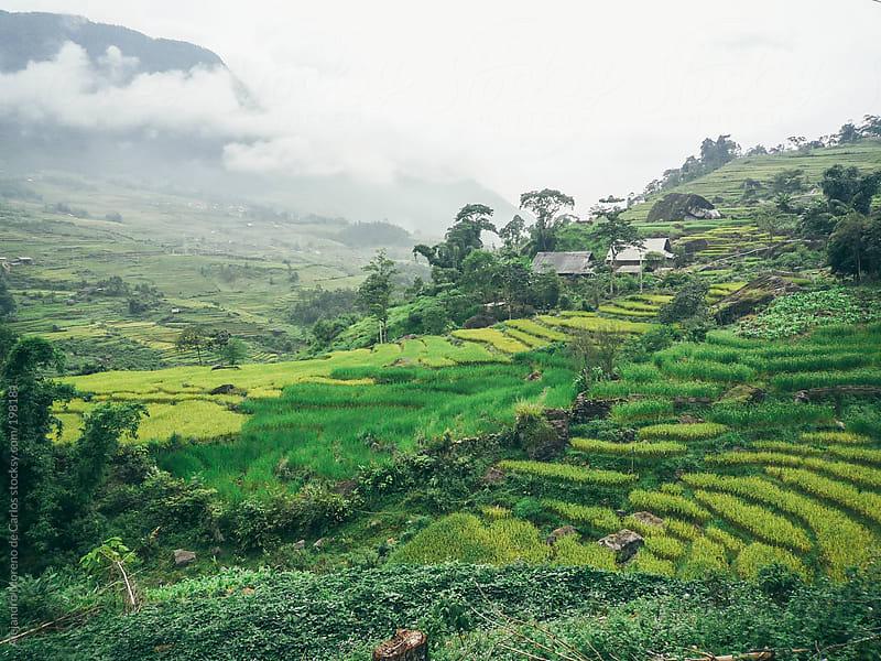 Rice fields landscape by Alejandro Moreno de Carlos for Stocksy United