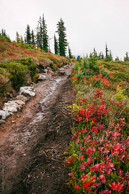 Dirt Trail Through Subalpine Ridge And Meadow by Luke Mattson for Stocksy United