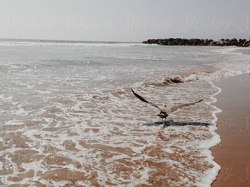 Bird on Beach by luke + mallory leasure for Stocksy United