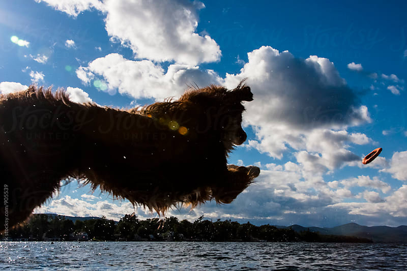 Dog jumps after toy into lake by Holly Clark for Stocksy United