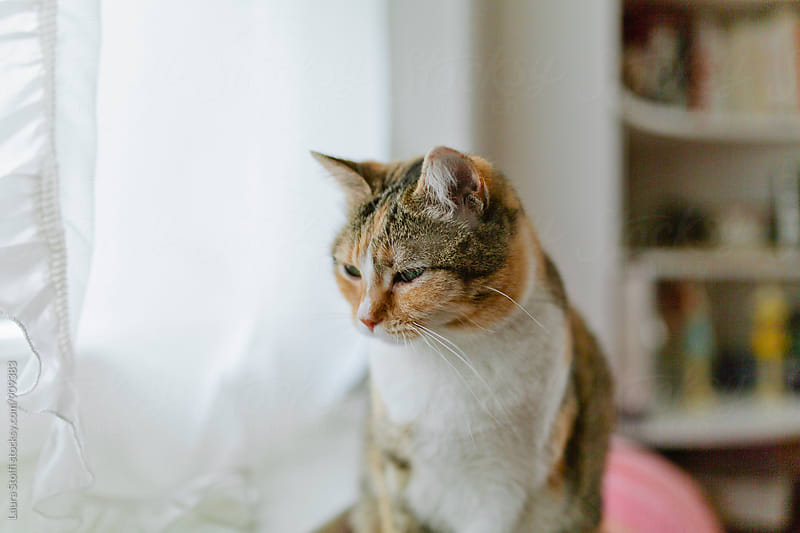 Pensive tabby cat sits in front of window by Laura Stolfi for Stocksy United