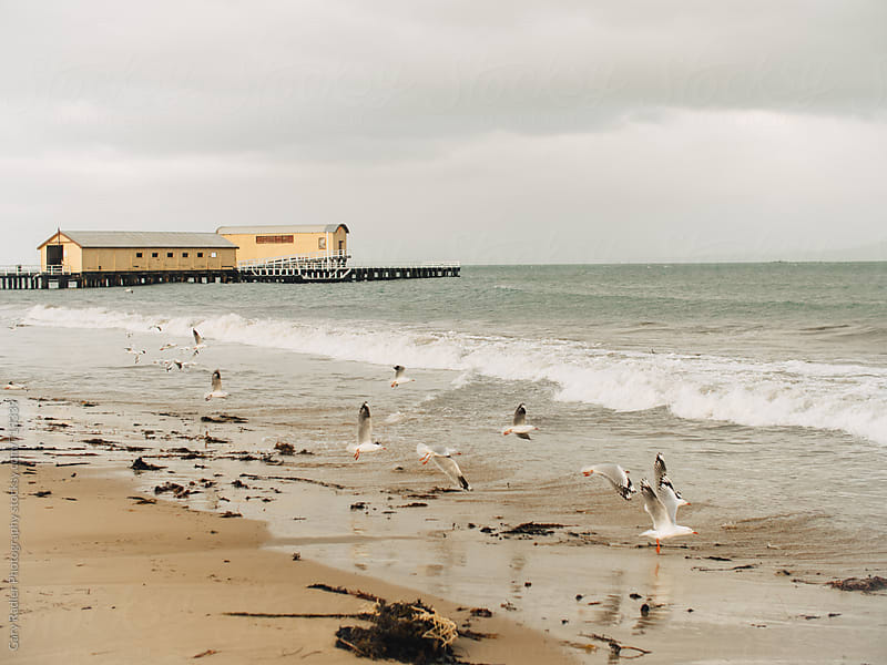 Seagulls flying near the sand at Queenscliff by Gary Radler Photography for Stocksy United