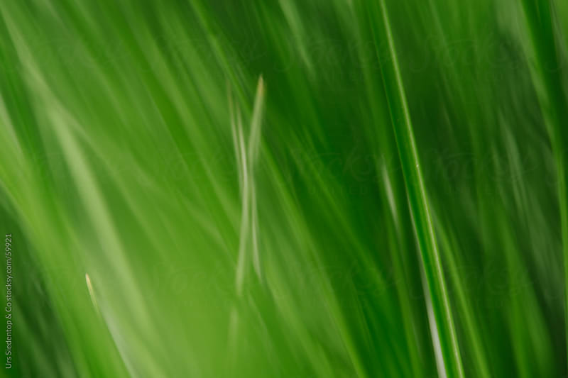 Grass background out of focus by Urs Siedentop & Co for Stocksy United