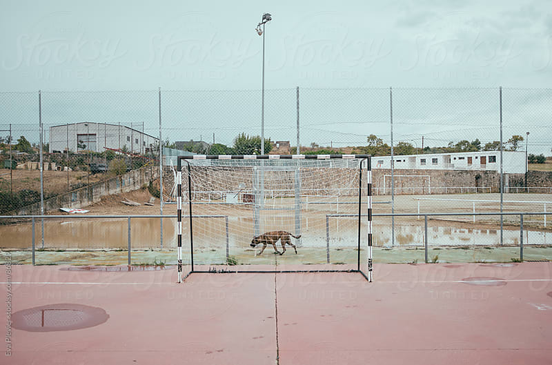 Dog walking by on a football field by Eva Plevier for Stocksy United