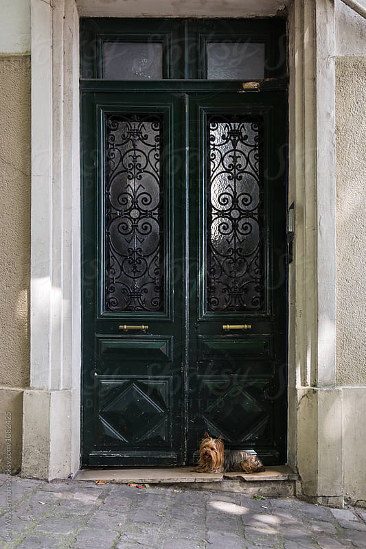 Dog in Doorway in Paris by Jeff Wasserman for Stocksy United