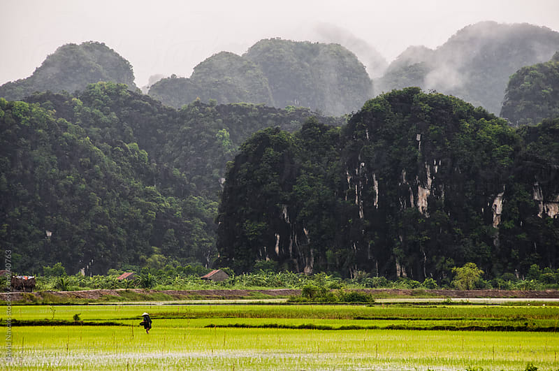 Tam Coc Rice fields by David Navais for Stocksy United